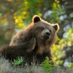 why-we-itch-bear_67802_990x742